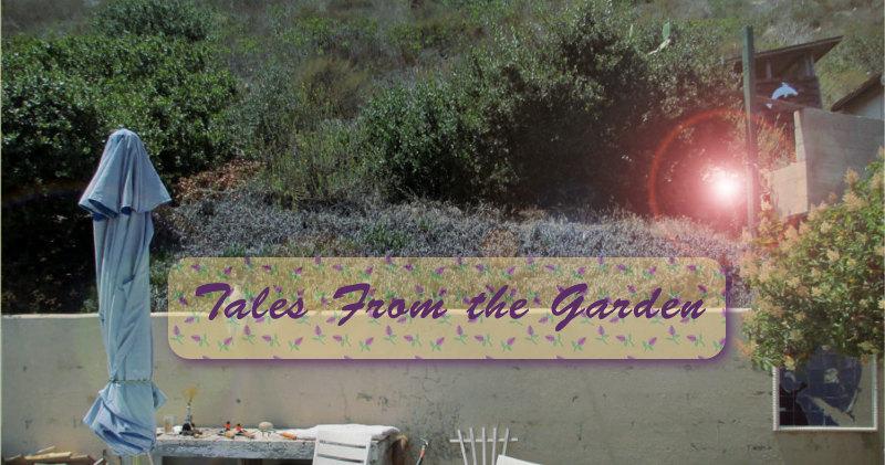 permaculture gardening methods